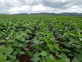 Biotrop aposta em crescimento acima 50% para 2020