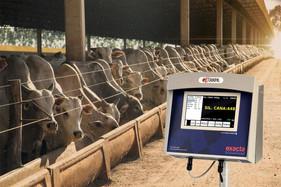 Inovações tecnológicas aumentam eficiência e produção em fazenda de confinamento