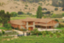 Bodega - Vineyard.JPG
