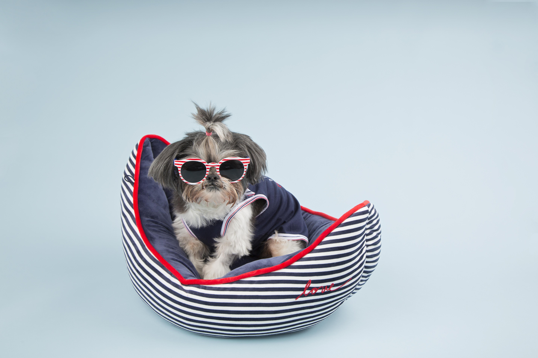 Kitty Sail Boat