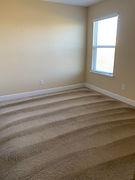 pretty carpet.jpg