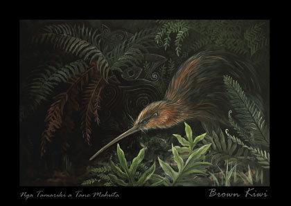 Postcard C6 - Kiwi