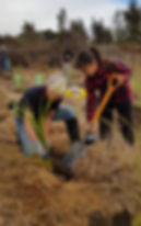 Project Tongariro planting