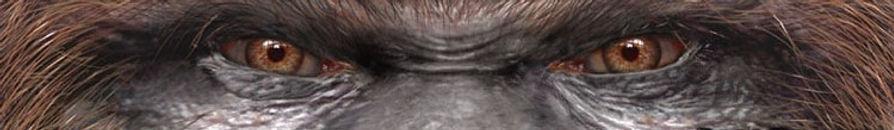 bsp_eyes_small_v2 (2).jpg