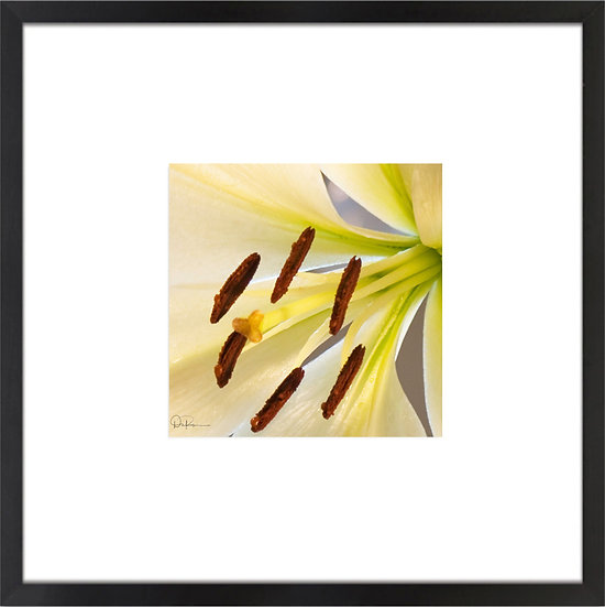 "White Lily Print With 4"" Mat and Black or White Frame"