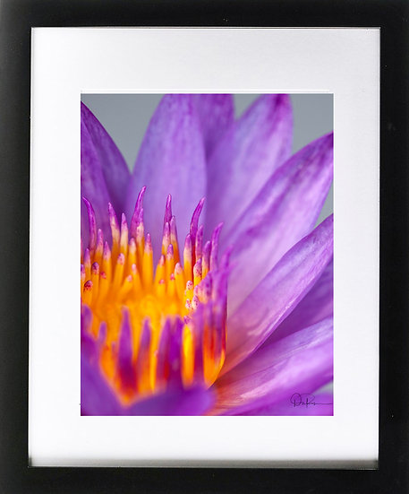 "Water Lily Print With 2"" Mat and Black Frame"