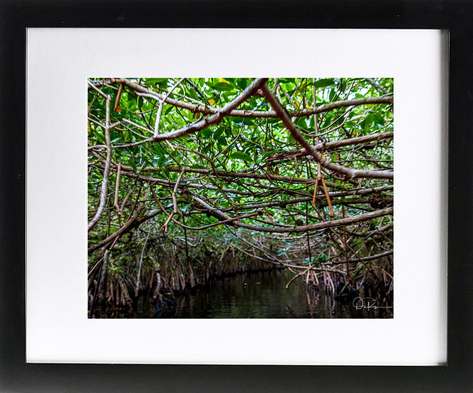 "Everglades V Print with 2"" Mat and Black Frame"