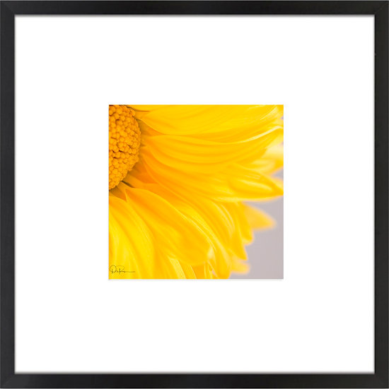 "Sunflower Print With 4"" Mat and Black or White Frame"