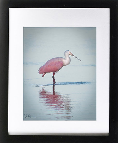 "Roseatte Spoonbill at J N Ding Darling NWR II Print with 2"" Mat and Black Fram"