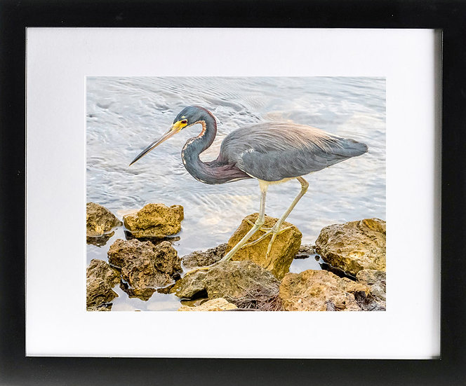"""JN Ding Darling NWR II Print with 2"""" Mat and Black Frame"""