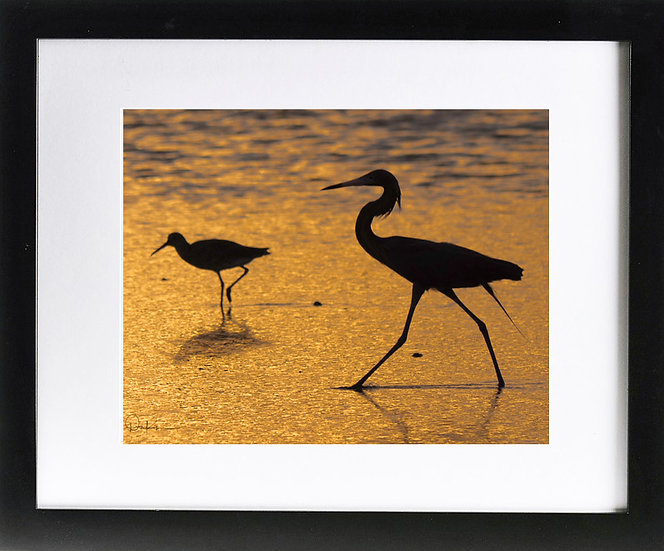 "Bird Silhouettes in Ft. De Soto Park Print with 2"" Mat and Black Frame"