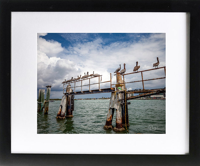 """Brown Pelicans in St. Pete Beach Print with 2"""" Mat and Black Frame"""