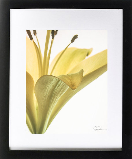"Yellow Iris II Print With 2"" Mat and Black Frame"