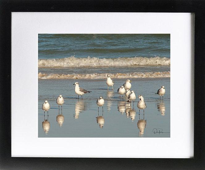 "Gulls at Daytona Beach Shores I Print with 2"" Mat and Black Frame"