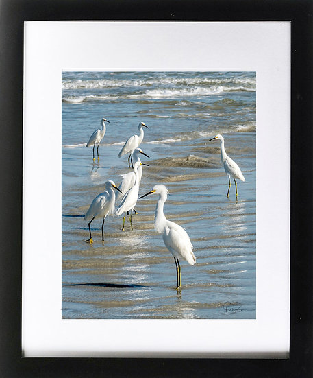 "Snowy Egrets at Smyrna Dunes Print with 2"" Mat and Black Frame"