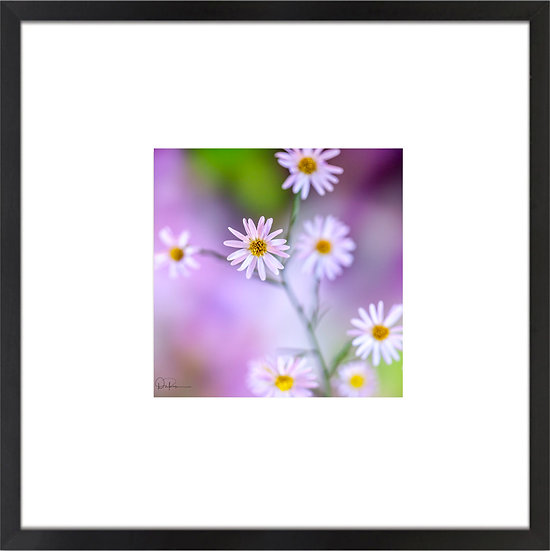 "Bushy Aster (Florida native) Print With 4"" Mat and Black or White Frame"