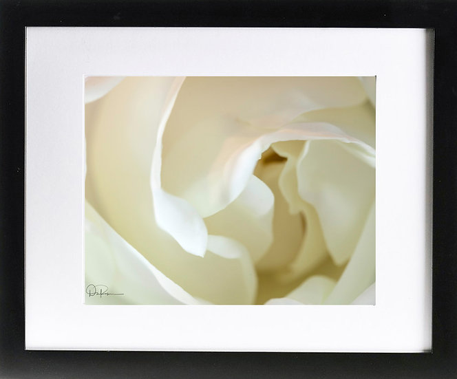 "Magnolia (Florida native) Print With 2"" Mat and Black Frame"