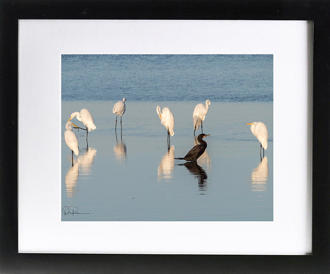 "Egrets and Cormorant at J N Ding Darling NWR I Print with 2"" Mat and Black Frame"