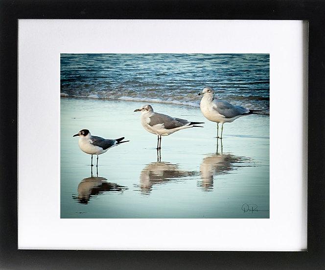 "Three Gulls at Daytona Beach Shores II Print with 2"" Mat and Black Frame"