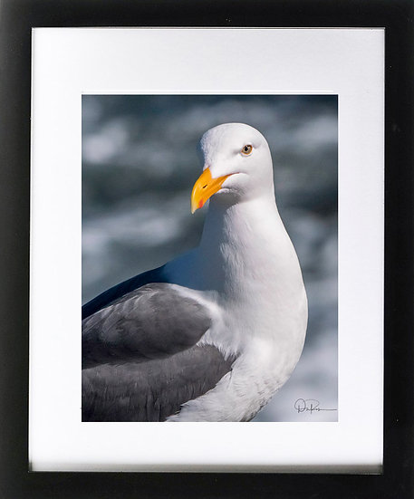 """California Gull Print with 2"""" Mat and Black Frame"""