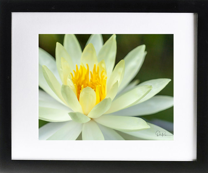 """Water Lily Print With 2"""" Mat and Black Frame"""