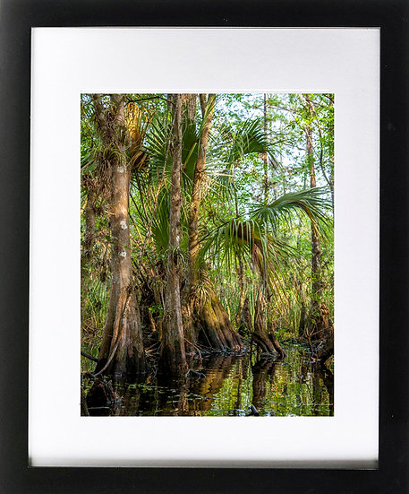 "Everglades II Print with 2"" Mat and Black Frame"