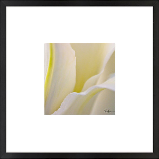 "Lily print with 4"" Mat and Black or White Frame"