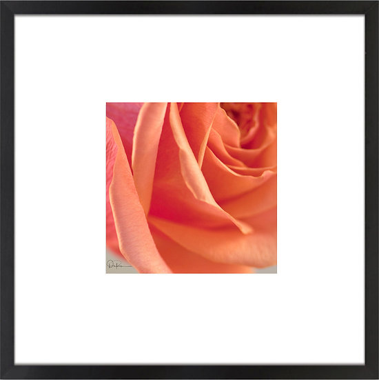 """Rose Print With 4"""" Mat and Black or White Frame"""