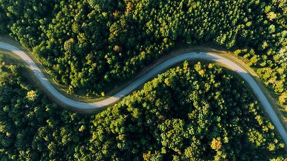 trees-scaled.jpg