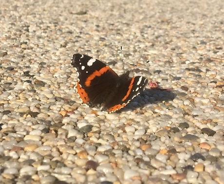 Schmetterling 3.jpg