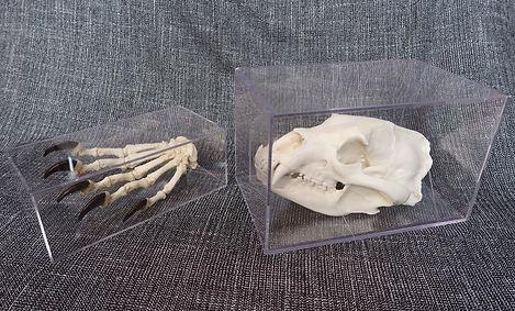 right foot and skull.jpg