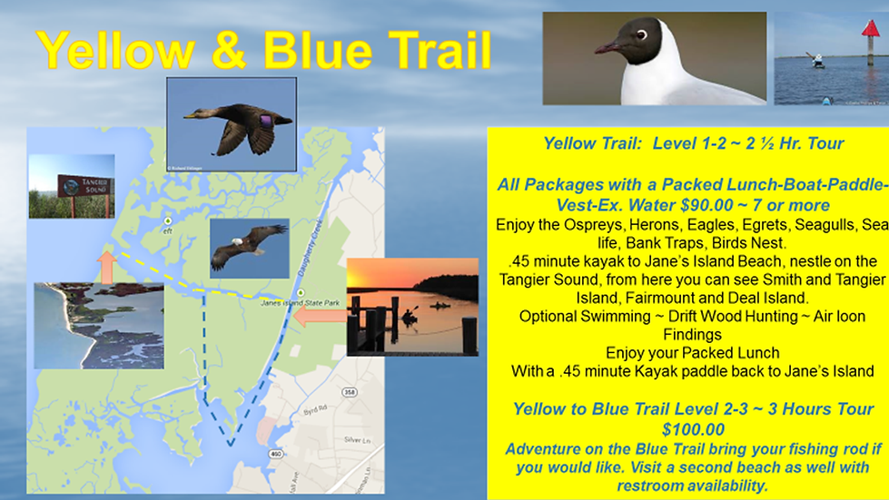 Yellow & Blue Trail.png