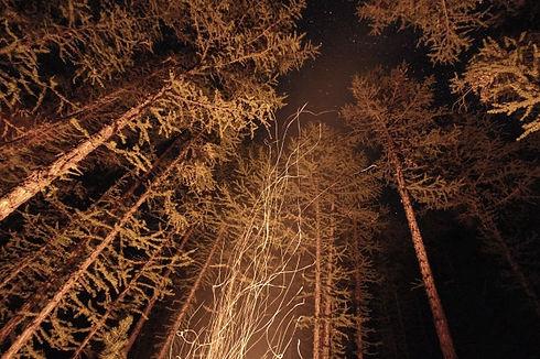 sparks-from-bonfire-night-woods-flying-sky-fire-woods-starry-sky_86390-1679%20(1)_edited.jpg