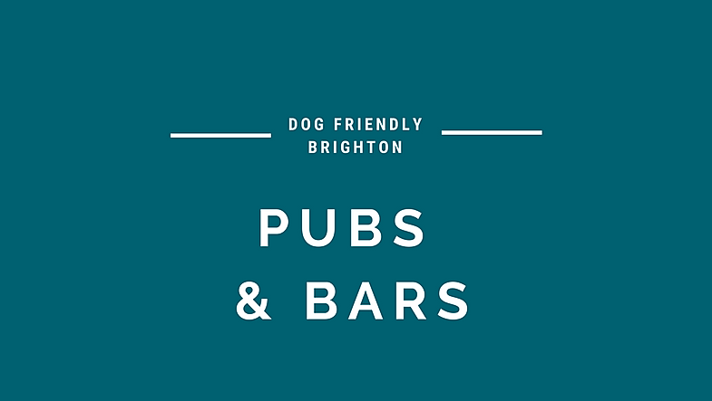 Dog Friendly Pubs & Bars in Brighton
