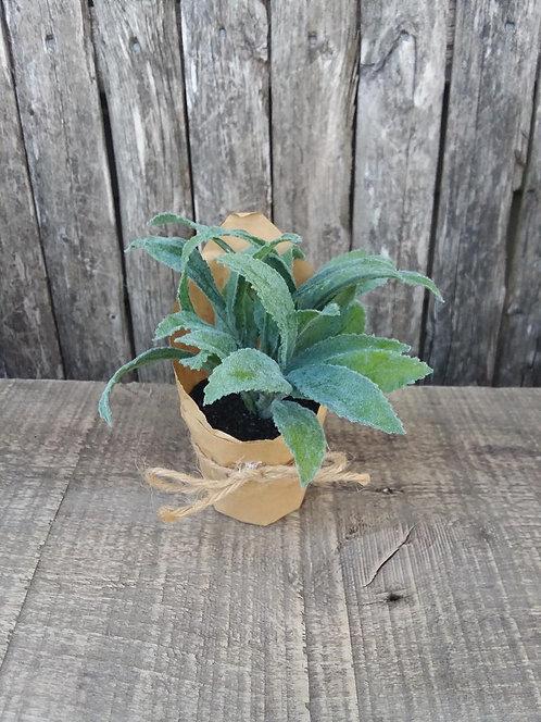 Paper Pot Herb