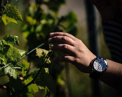 Laura Feurers Hand geift zur Weinrebe