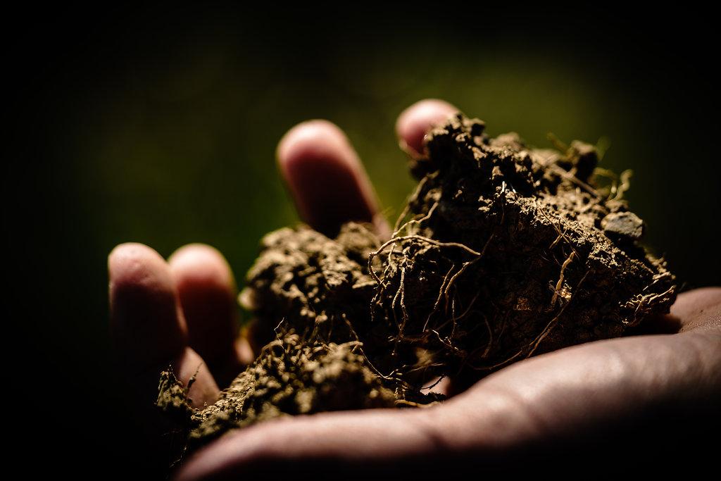 Erde der Weinberge