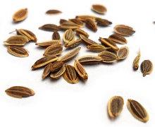 Dill Seed 蒔蘿子 100gm.