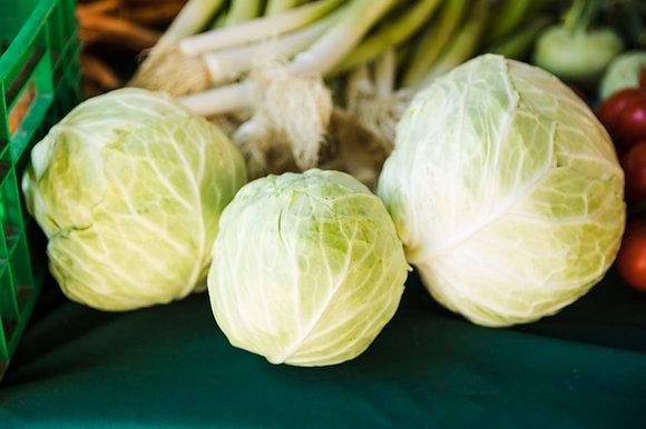 Cabbage 高麗菜