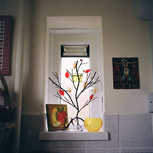 tree window.jpg