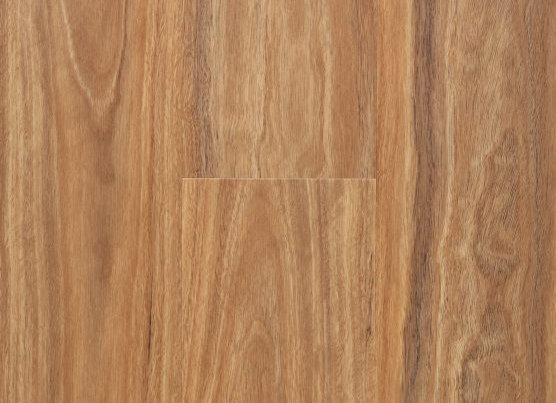 Warm Spotted Gum