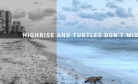 Buddina Beach Turtles