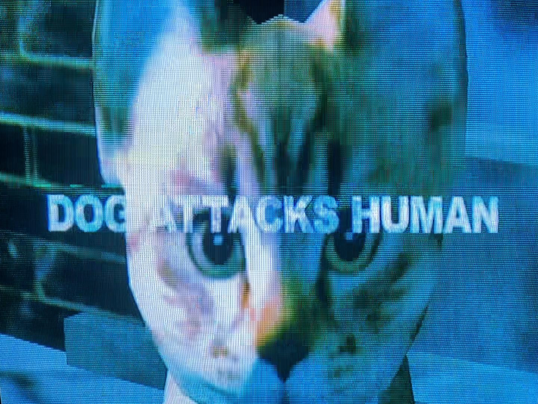 NINJAS / DOG ATTACKS HUMAN
