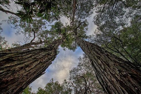 best-electricity-jarrah-trees-australia.