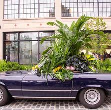 Plant Passenger X 80's Mercedes