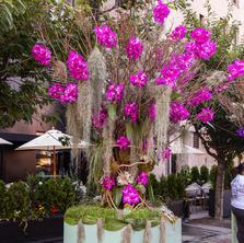 Vanda Orchid Tree by Ariston Flowers