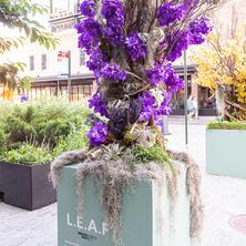 Lavender Phalaenopsis Tree