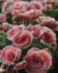Hellrosa Rosen