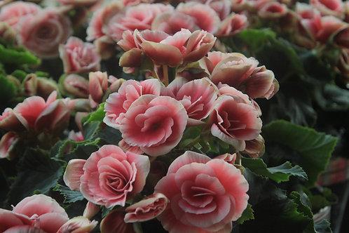 Rose Petal Amalaki Eye Spray