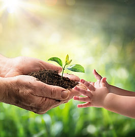 Old Man Giving Young Plant To A Child -